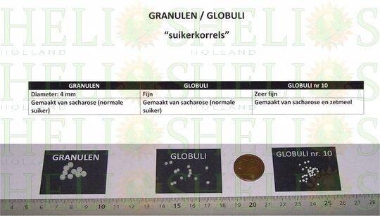 Granulen-en-Globulen