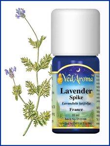 Lavendel Spike biologische etherische olie