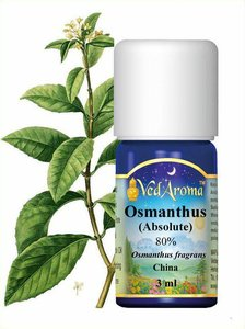 Osmanthus etherische olie Absolute VedAroma